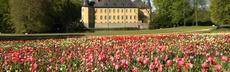 Stiftung schloss dyck   tulpenwiese 2